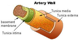 Ateroesclerosis y obesidad