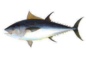 Pescado azul rico en ácidos grasos Omega 3