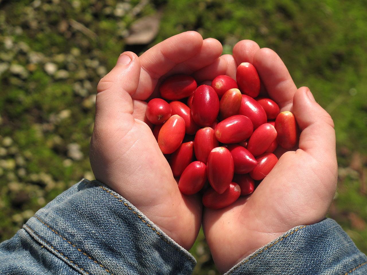 La fruta milagrosa: ¿sirve para adelgazar? - aPerderPeso.com