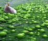 Cremas a base de algas para reducir y tonificar