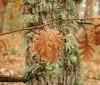 Plan otoño para adelgazar
